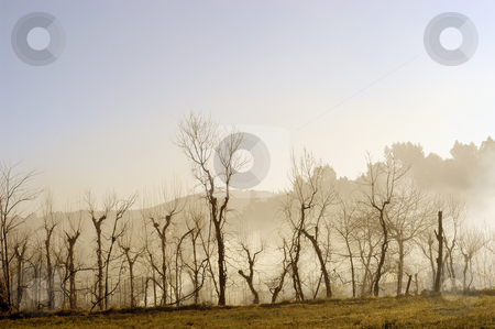 Fog stock photo, Fog trees in autumn by Rui Vale de Sousa