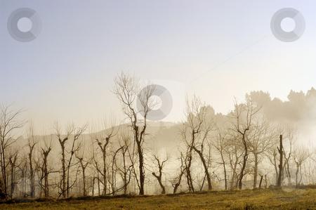 Fog stock photo, Fog trees in autumn by Rui Vale de Sousa