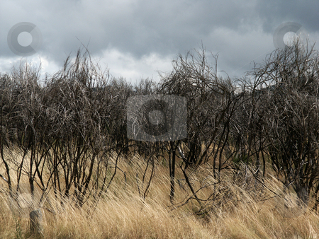 Bushs stock photo, Field vegetation by Rui Vale de Sousa