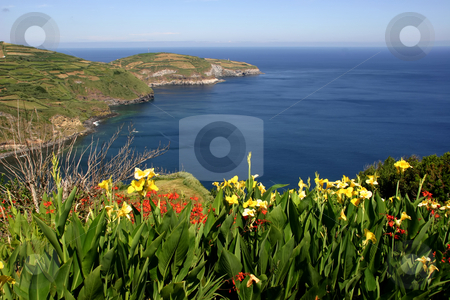 Flowers stock photo, Azores flowers at the coast by Rui Vale de Sousa