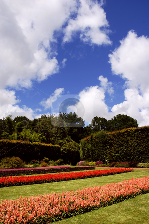 Garden stock photo, Beauty red flowers in a garden of azores by Rui Vale de Sousa