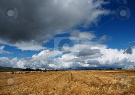 Space stock photo, Fields vegetation by Rui Vale de Sousa