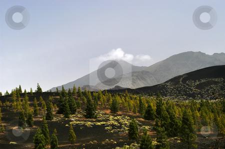 Mountains stock photo, Mountain trees by Rui Vale de Sousa