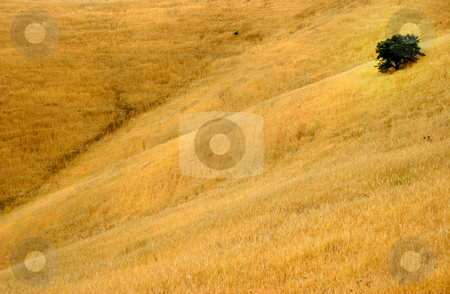 Fields stock photo, Yellow fields by Rui Vale de Sousa