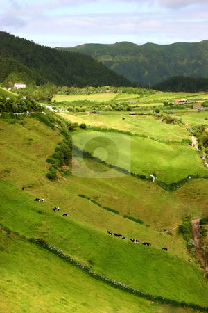 Farm stock photo, Farm view in the azores island of sao miguel by Rui Vale de Sousa