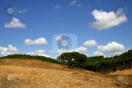 Hill stock photo, Natural south portuguese landscape by Rui Vale de Sousa