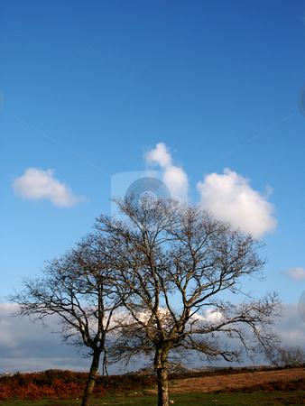 Trees stock photo, Forest details by Rui Vale de Sousa