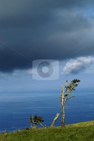 Trees stock photo, Azores coastal trees at s miguel island by Rui Vale de Sousa