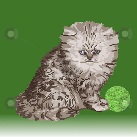 Gray Persian Kitten stock photo, Gray Persian kitten sitting beside a ball of green yarn. by Karen Carter