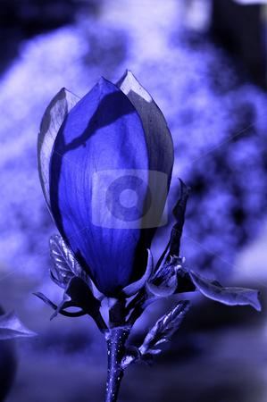 Blue stock photo, Blue flower by Rui Vale de Sousa