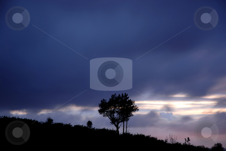 Lonely stock photo, Tree alone in the top of the mountain, long exposure shot by Rui Vale de Sousa