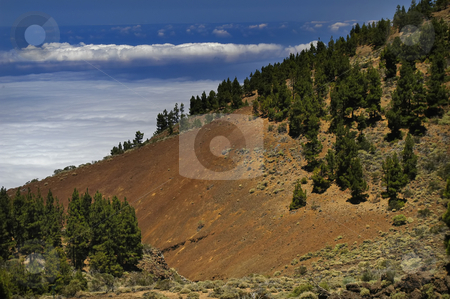 Trees stock photo, Trees at the mountain by Rui Vale de Sousa