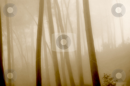 Fog stock photo, Fog in the forest by Rui Vale de Sousa