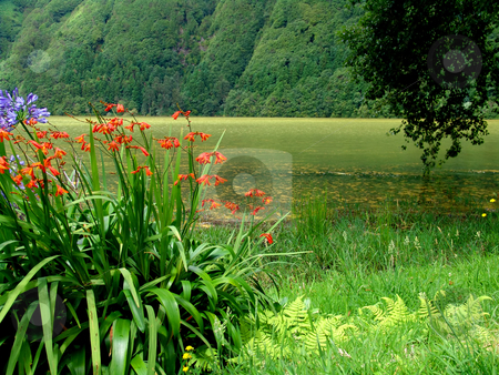 Flowers stock photo, Flowers at the lake in azores by Rui Vale de Sousa