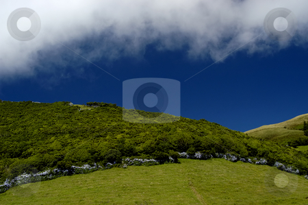 Vegetation stock photo, The green fields of azores by Rui Vale de Sousa
