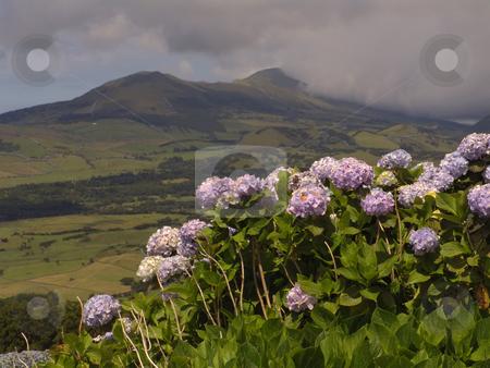 Flowers stock photo, Azores landscape view by Rui Vale de Sousa
