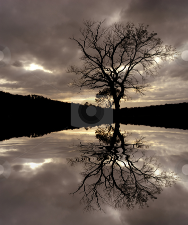 Tree stock photo, Tree at the sunset with water reflection by Rui Vale de Sousa