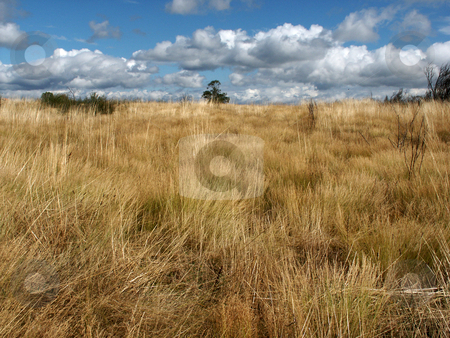 Fields stock photo, Field vegetation by Rui Vale de Sousa