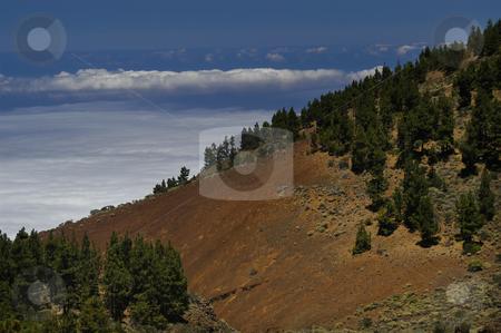 View stock photo, Mountain trees by Rui Vale de Sousa