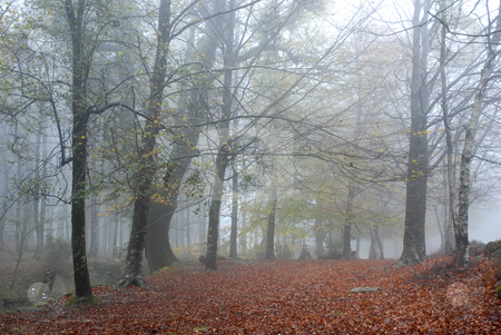 Autumn stock photo, Autumn fog at the forest in the portuguese national park by Rui Vale de Sousa
