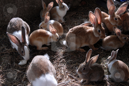 Rabbits stock photo, Lots of big and small rabbits in the cage by Rui Vale de Sousa