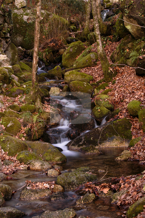 River stock photo, Small river on the forest by Rui Vale de Sousa