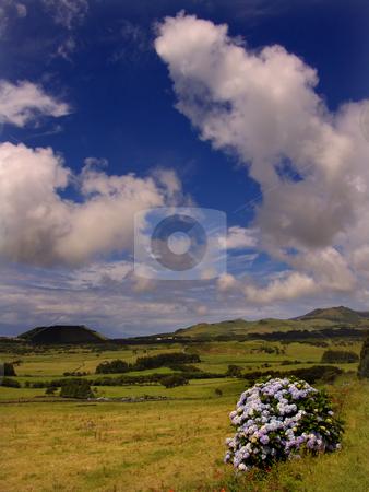 Flowers stock photo, Azores landscapes by Rui Vale de Sousa