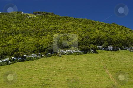 Hill stock photo, Azores landscape by Rui Vale de Sousa
