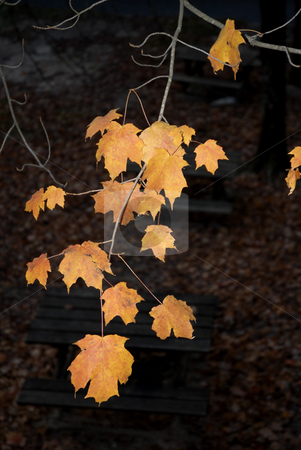 Leaves stock photo, Autumn leaves detail in the portuguese national park by Rui Vale de Sousa