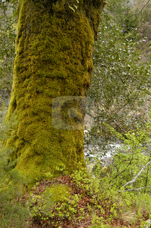 Tree stock photo, Forest details by Rui Vale de Sousa