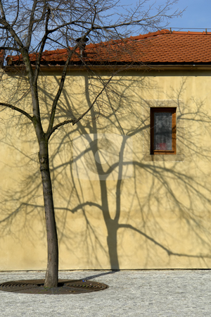 House stock photo, House with a tree by Rui Vale de Sousa