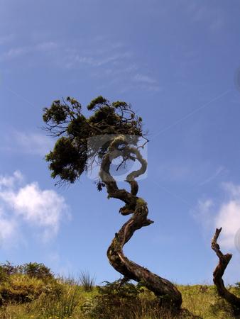 Tree stock photo, Tree in the landscape by Rui Vale de Sousa