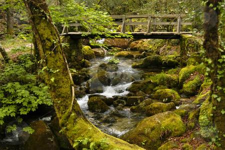 Bridge stock photo, Forest bridge by Rui Vale de Sousa