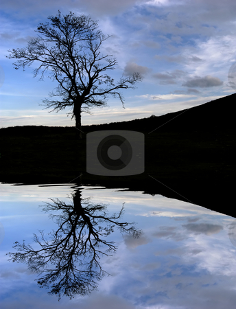 Tree stock photo, Tree in the top of the mountain with water reflection by Rui Vale de Sousa