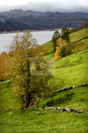 Trees stock photo, Lake trees in autumn by Rui Vale de Sousa
