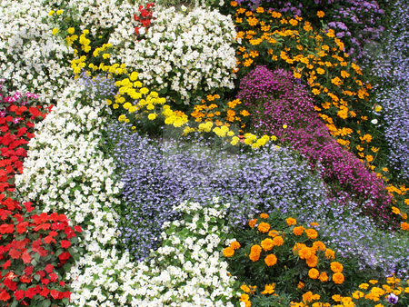 Flowers stock photo, Garden of flowers by Rui Vale de Sousa