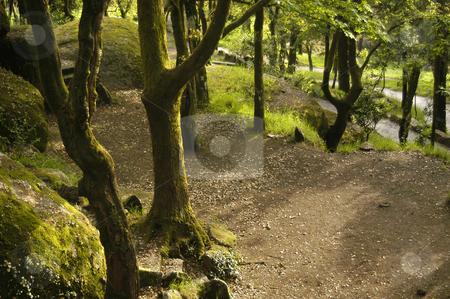 Forest stock photo, Portuguese national park trees by Rui Vale de Sousa