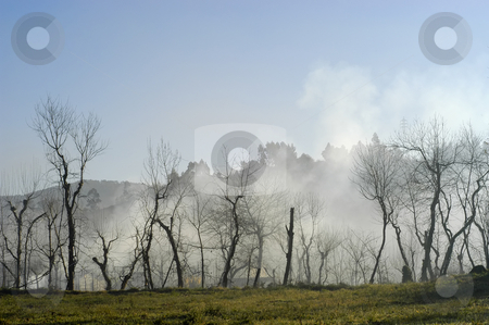 Fog stock photo, Trees in the foog by Rui Vale de Sousa