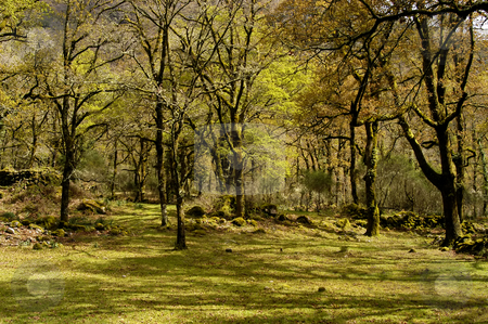 Forest stock photo, Forest detail of the portuguese national park by Rui Vale de Sousa