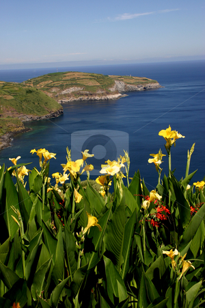 Flowers stock photo, Azores flowers and the sea by Rui Vale de Sousa