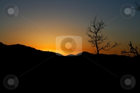 Black Hills Sunset stock photo, A wintering deciduous extends the black range of hills sillouhetting a deep orange sunset. by Gregory Johnson