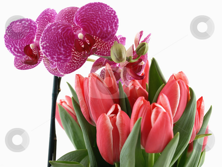 Orchid and Tulips Bouquet stock photo, A phalaenopsis orchid and a bouquet of pink tulips over a white background. by Robert Gebbie