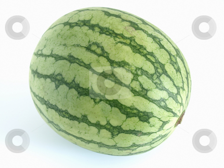 Watermelon stock photo, An isolated green watermelon studio isolated against a white background. by Robert Gebbie