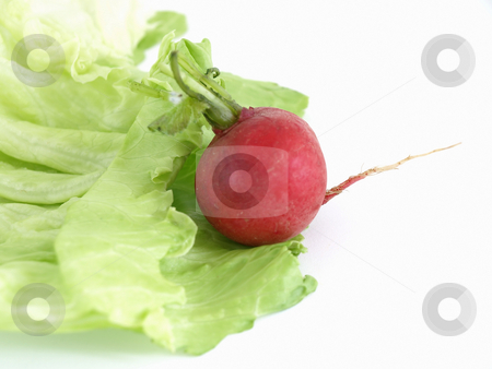 Radish and Lettuce stock photo, Red radish on a green leaf of lettuce, studio isolated on a white background by Robert Gebbie