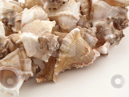 Shells on White stock photo, Various types of sea shells isolated on a white background. by Robert Gebbie