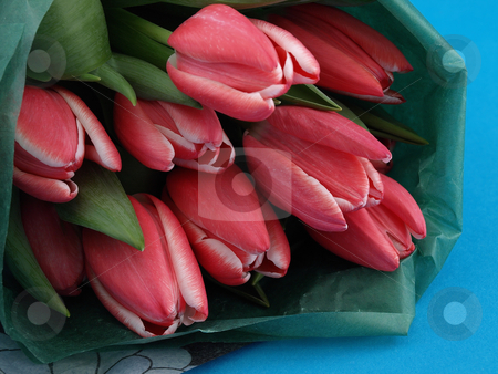 Tulips on Blue stock photo, Beautiful pink tulips in a bunch over a blue background. by Robert Gebbie