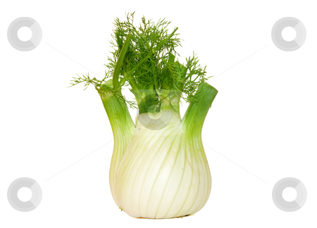 Fennel stock photo, Fresh fennel isolated on white background by ANTONIO SCARPI