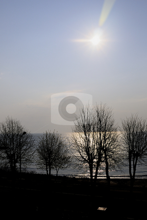 Sea and tress stock photo, Trees near the sea by Dragos Iliescu