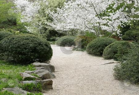 Garden Path stock photo, A path through a garden in the spring. by Darryl Vest
