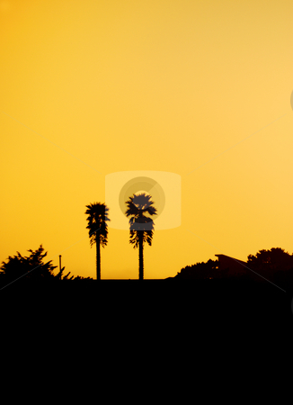 Two Palm Tree Silhouettes at Sunset stock photo, Two palm tree silhouettes against orange sunset sky on California coast. by Denis Radovanovic